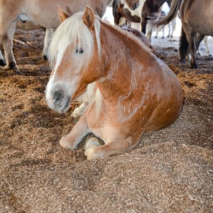 HorseFlakes Ponyhof Großkarolinenfeld 4
